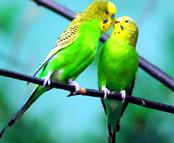 http://lanny.hexat.com/Burung%20hijau.jpg